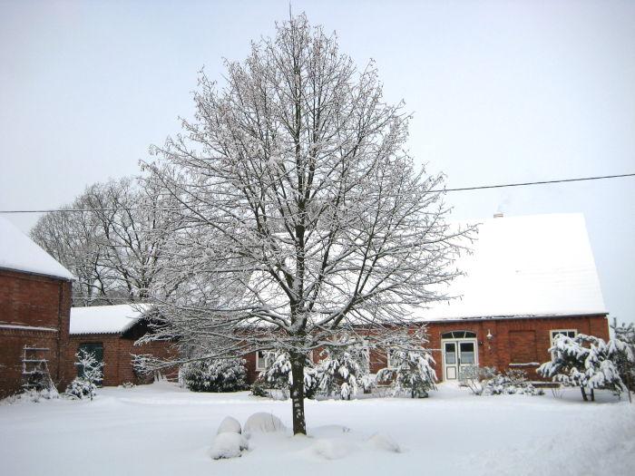 wespen im winter in der wohnung wespen im zimmer hilfe tiere garten wespenkoenigin wespen im. Black Bedroom Furniture Sets. Home Design Ideas
