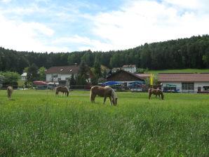 Ferienwohnung B Ferien- und Pferdehof Zankl
