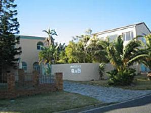 Avocet Cape town