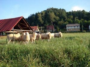 Ferienwohnung Bauernhof-Schoena