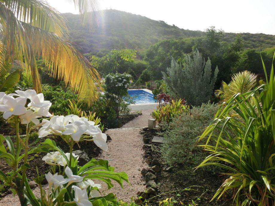 Tropische Pflanzenwelt