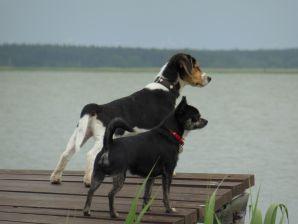 """Boddenhaus """" Piratennest Darss """" am Wasser mit Hund"""