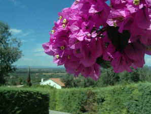 Ferienwohnung Il Mandorlo