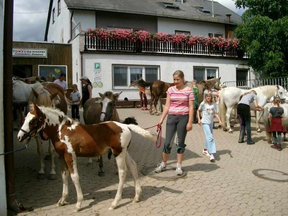 Hofgeschehen-Pferdepflege