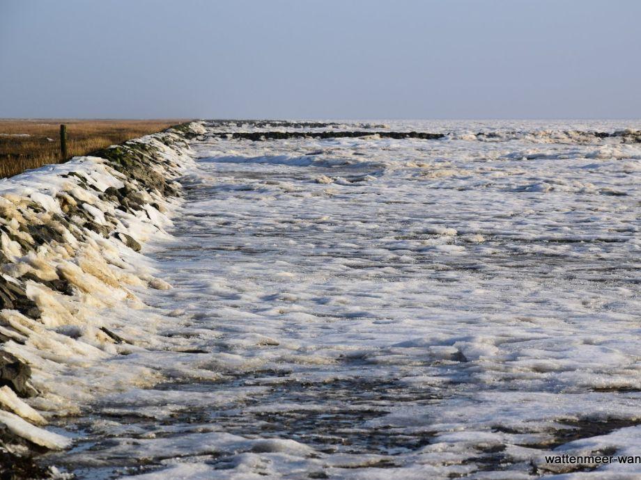 Ferienwohnung 2 Lagune Am Wattenmeer Wangerooge Frau