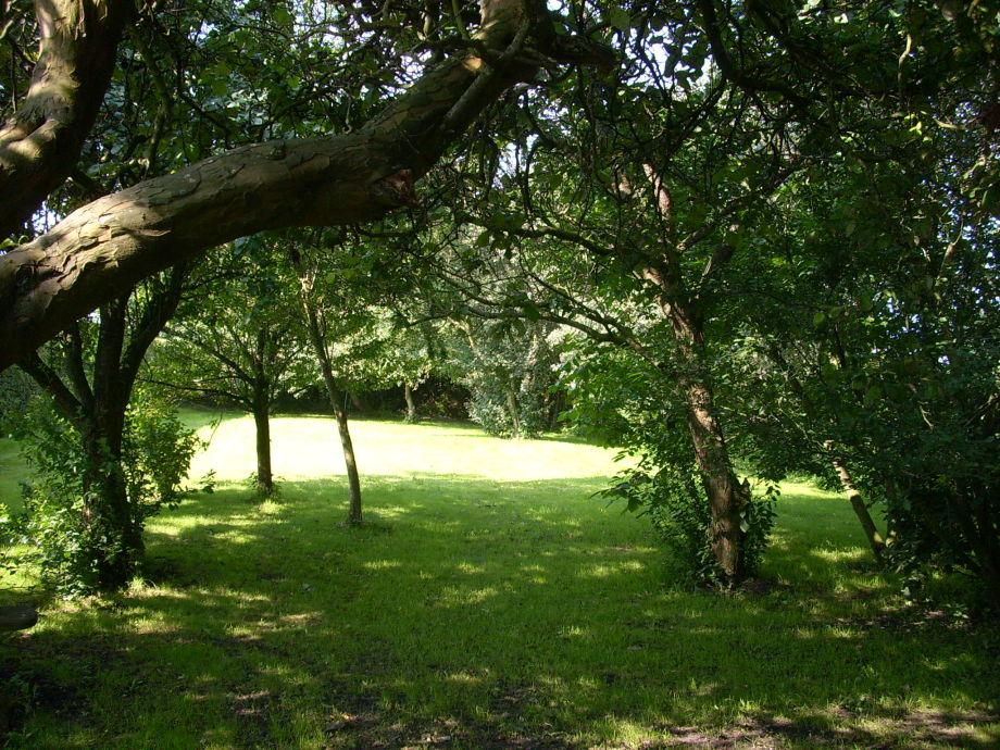 Der Garten mit Obstbäumen