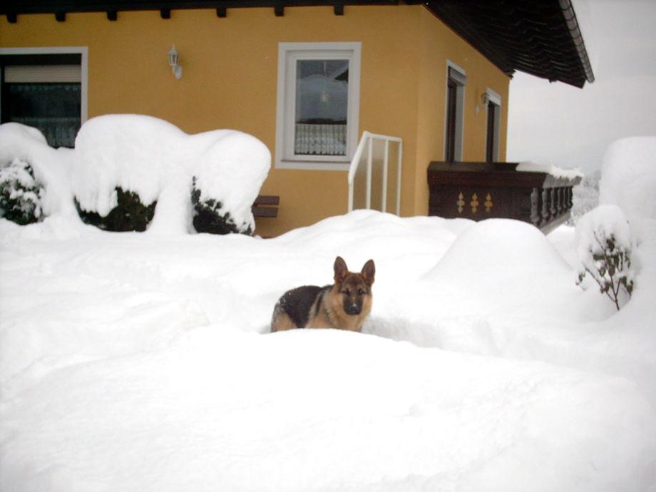 Winter in Sonnental