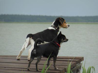 Piratennest mit Hund am Wasser