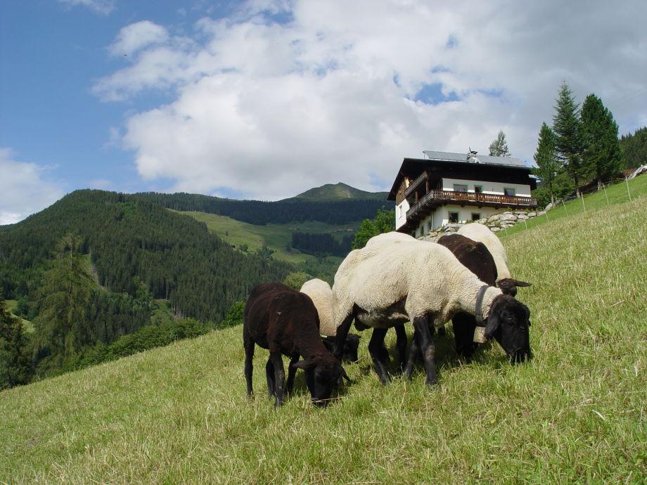 Berghaus Alleinlage, Natur pur!