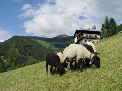 Berghaus Zillertal Hart