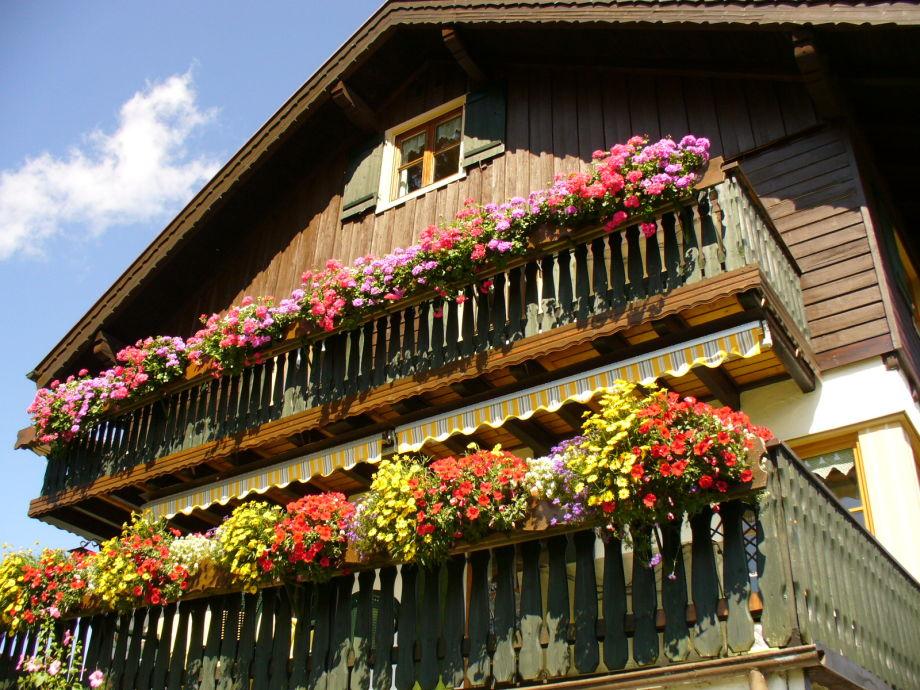 Blumenpracht auf d. Südseite