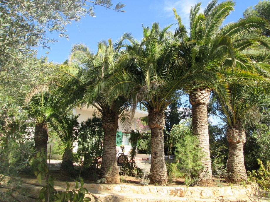 Blick durch die Palmen zum Haus