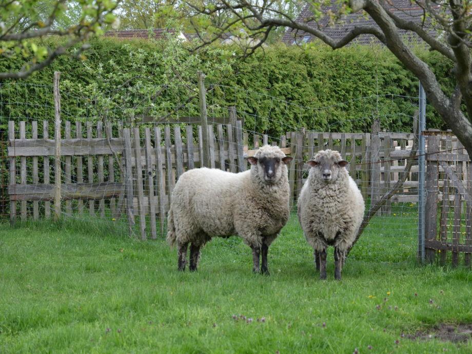 Ferienwohnung walter piesker spreewald firma for Schafe halten im garten