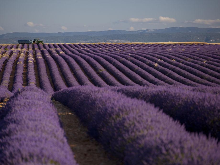 Ferienhaus 701 jou provence firma coquelicot gmbh for Lavendelfelder provence