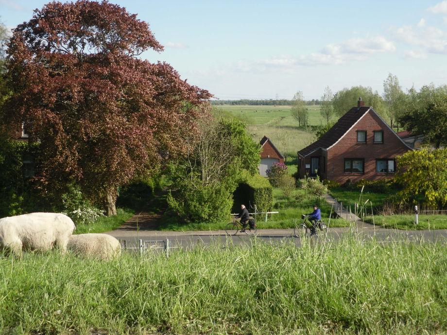 Blick vom Deich mit Schaf und weite Landschaft