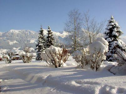Nebelhorn im Züchterhof