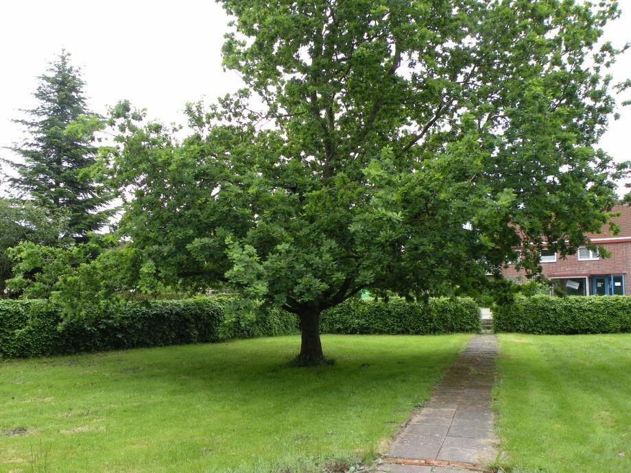 Alter Baumbestand
