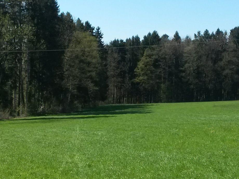 Wald hinter dem Ferienhaus