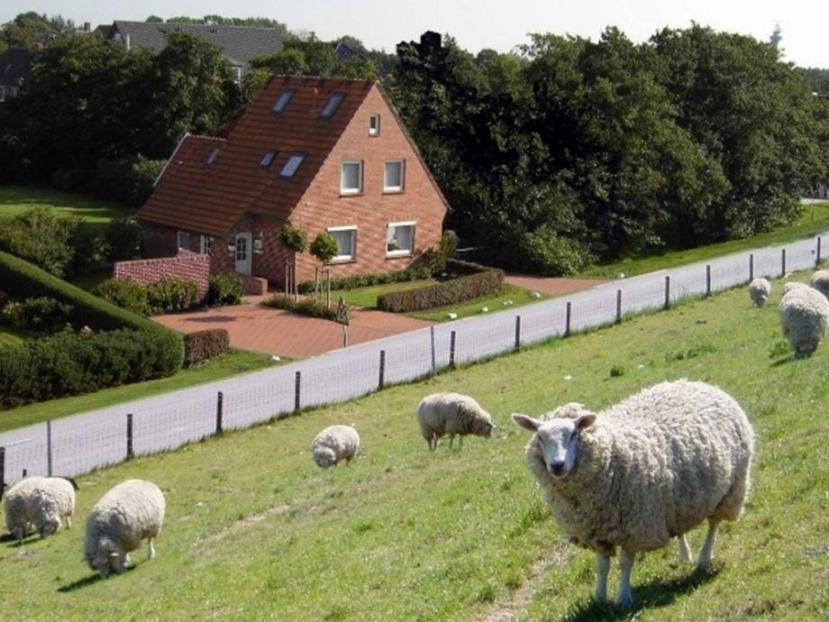 Tossenser Deich Blick auf Das Ferienhaus