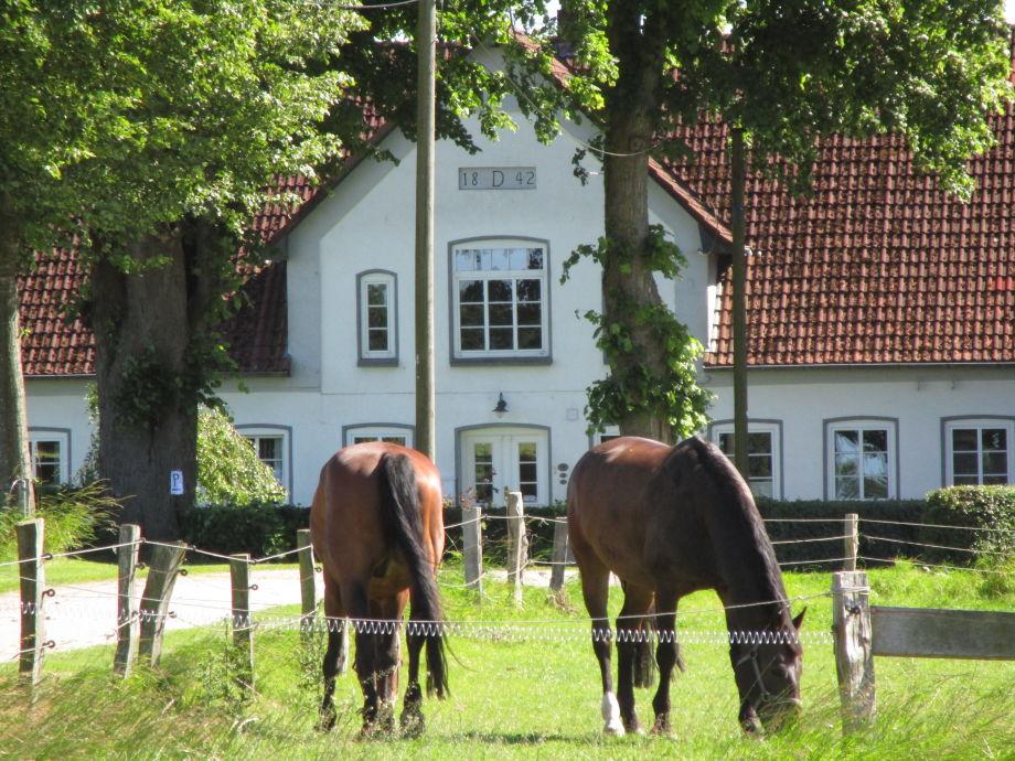 Hof Reumoos mit den Pferden