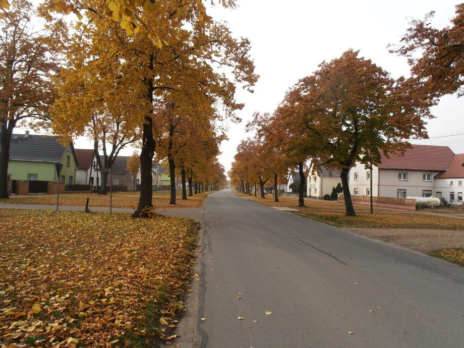 Dorfanger im Herbst