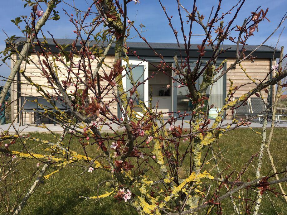 Frühling auf Buitenplaats Oudendijke