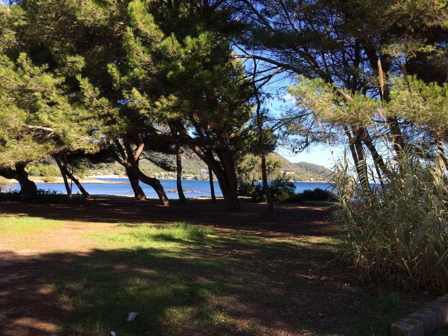 Blick auf die angrenzende Badebucht mit Pinienwald