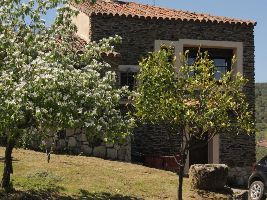 Obstbäume vor dem Haus