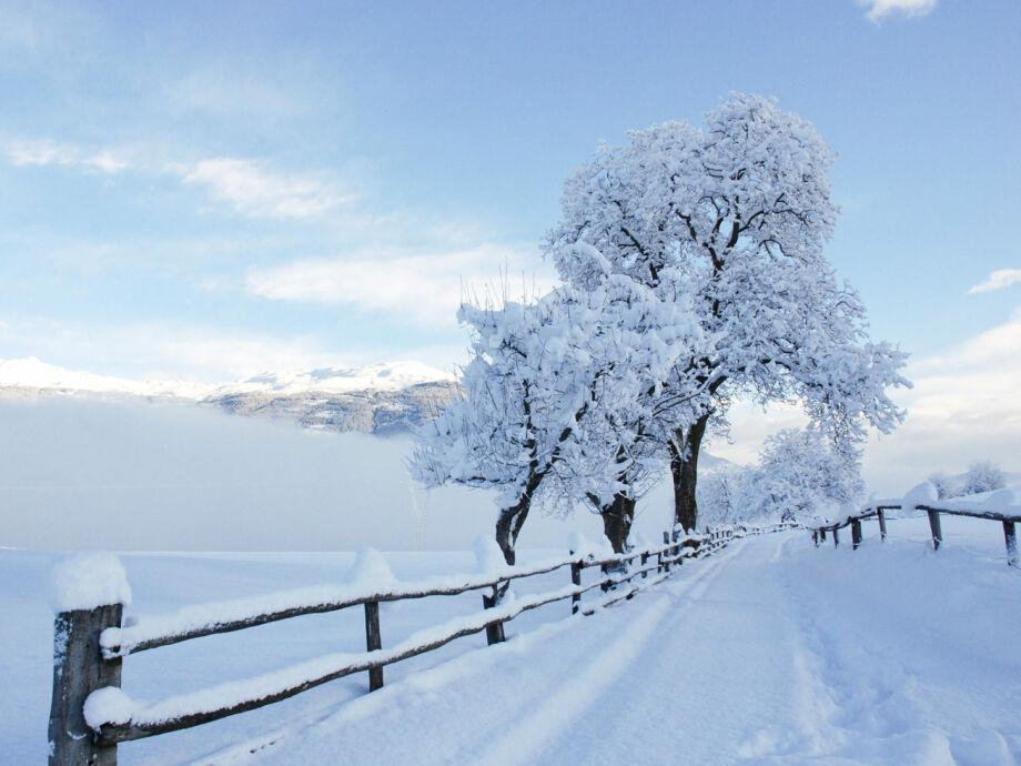 Winter Lajen-Albions