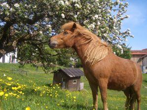 Ferienwohnung Ferien & Islandpferdehof Jungwirth