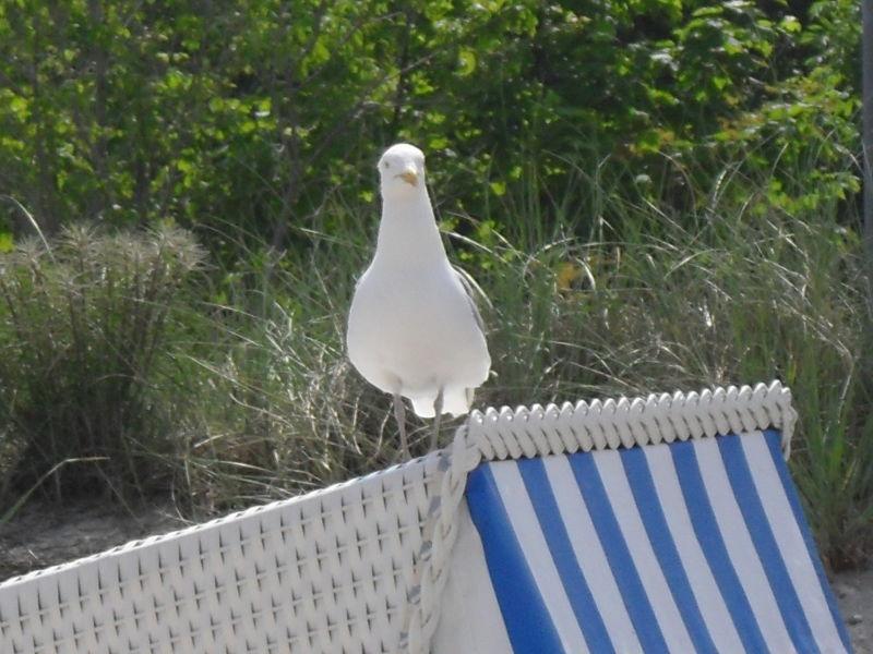 Ferienwohnung Strandbrise
