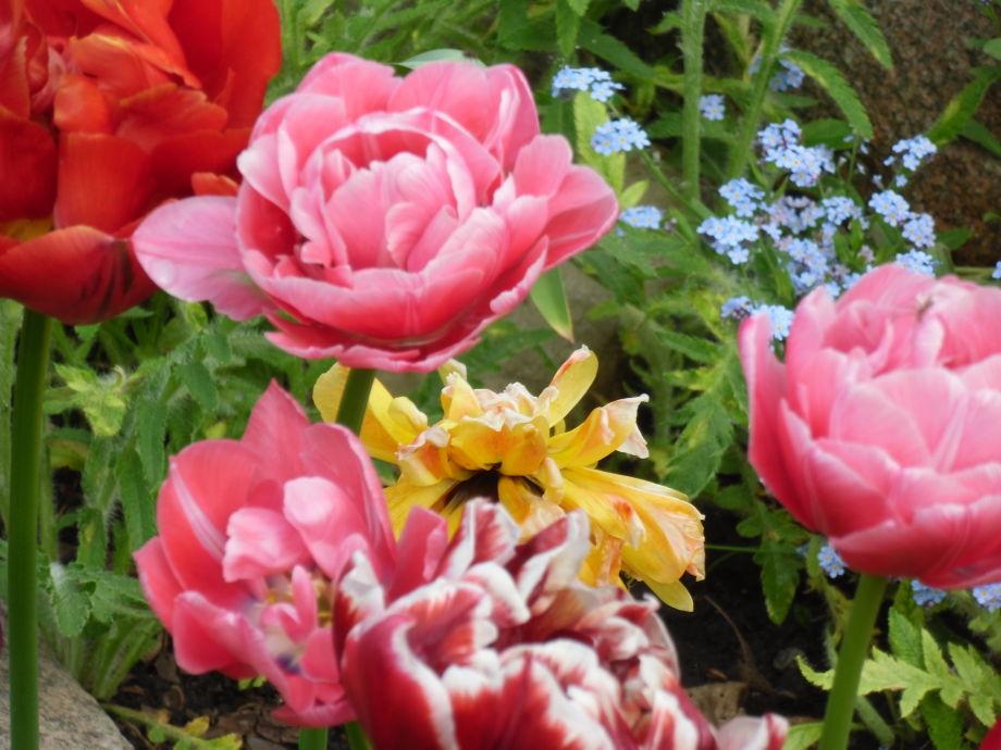 Der Frühling kommt in meinen Garten, jedes Jahr immer w