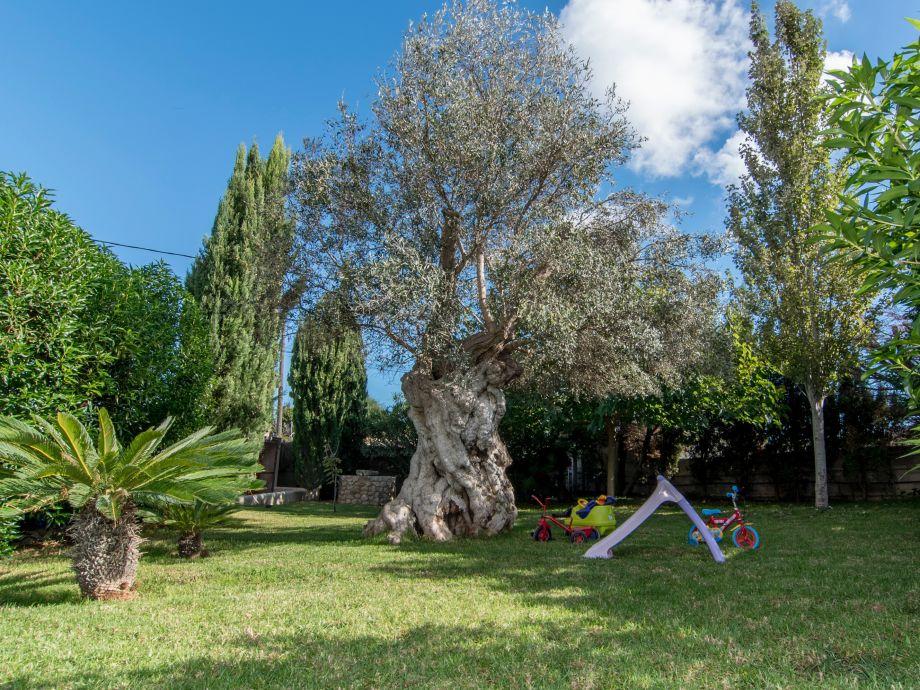 Mediterraner Garten Kosten U2013 Spinjo, Terrassen Ideen