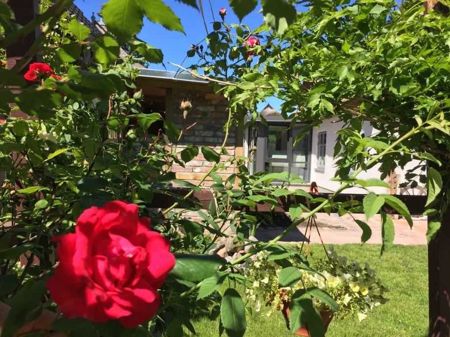 Sommer im Garten der Büdnerei-Wustrow