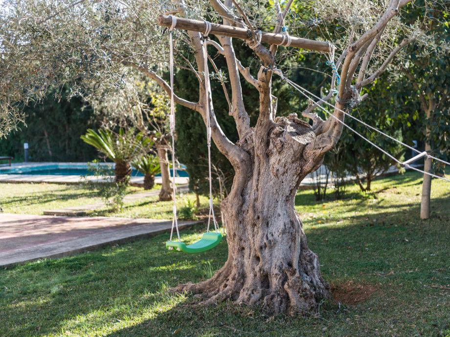 Schaukel am Olivenbaum