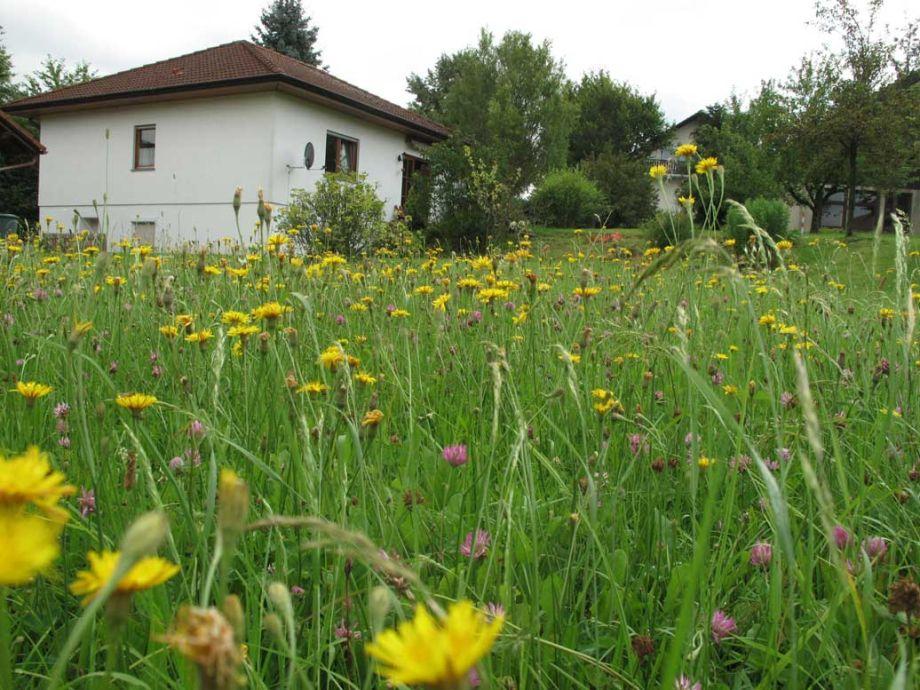 Großer Garten mit Terrasse