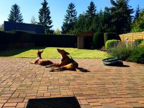 Ferienhaus für Mensch und Hund