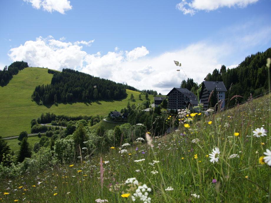 Blick von der bunten Almwiese auf die Ferienanlage