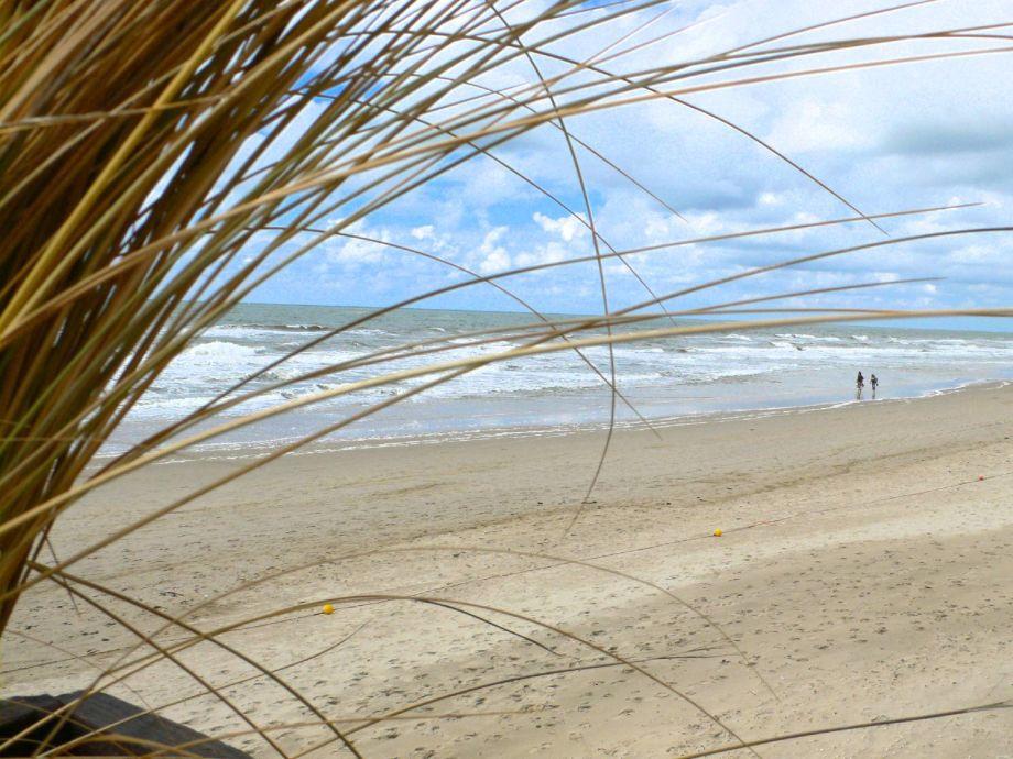 strand callantsoog weg zum strand blumenwiese. Black Bedroom Furniture Sets. Home Design Ideas
