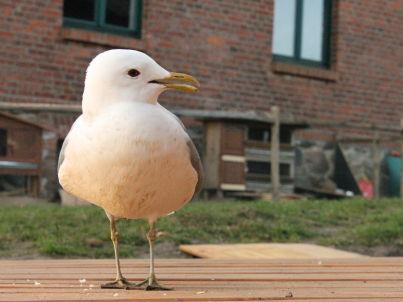 Ihr Gastgeber Storch www.deinhaus-kukuk.de