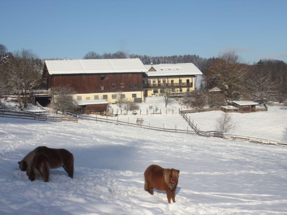 Ferienhof Schmauß im Winter