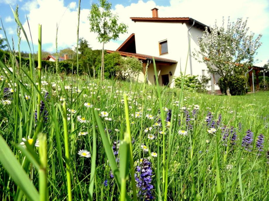 Ferienhaus umgeben von Blumenwiese, Ruhe und Harmonie