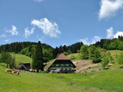 FeWo Schwarzwaldblick