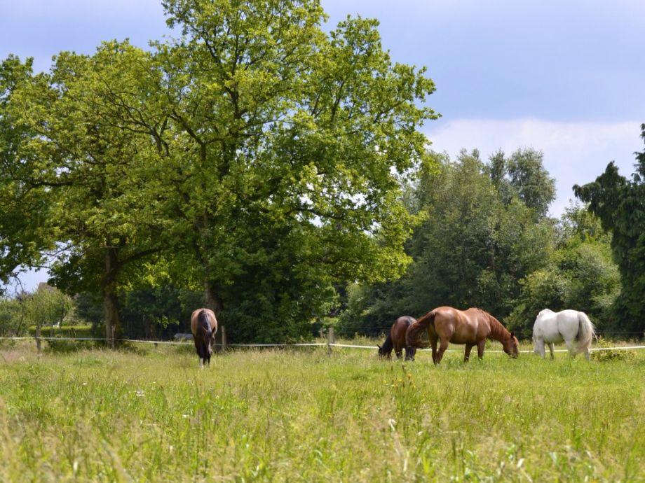 Unsere Pferde Blick Aus Dem Wohn Esszimmer