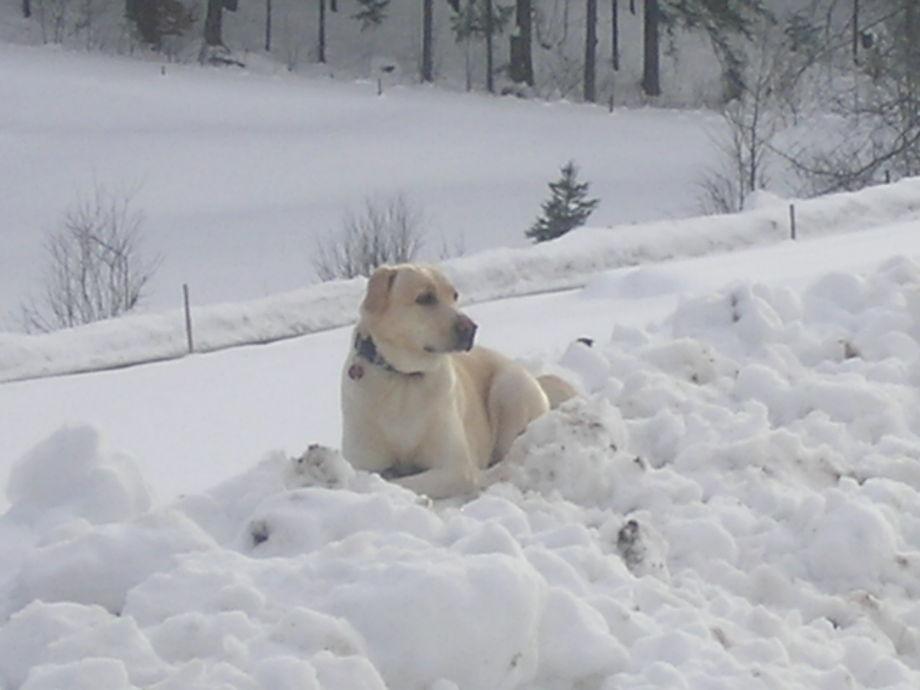 Trixie im Glück- endlich Schnee!