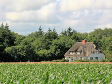 Ferienhaus Westerheide