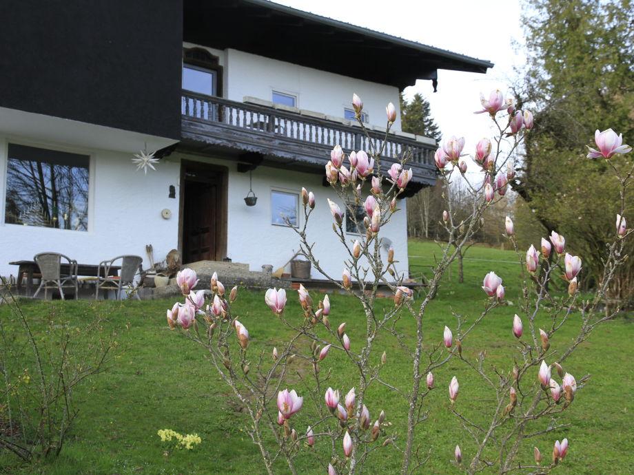 Haus mit Magnolie von Süden