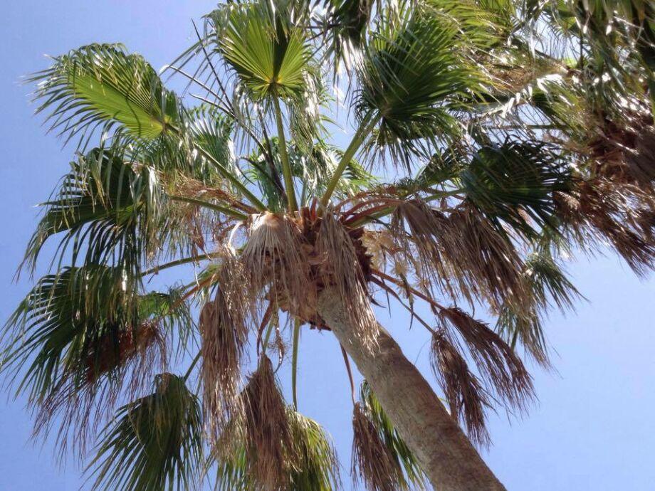 Unter Palmen....