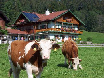 """Ferienwohnung Staufenblick Dachstudio im Haus """"Beim Vorderpommer"""""""