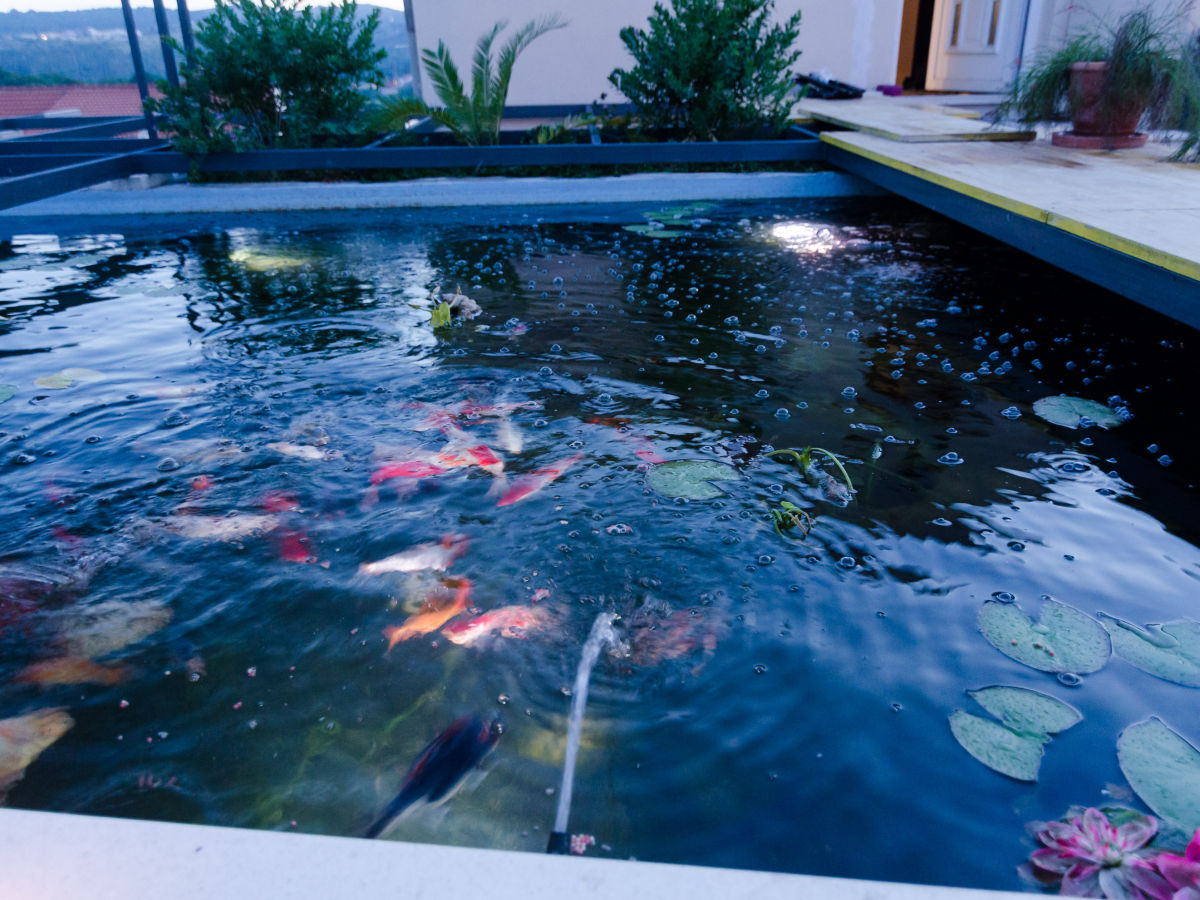Villa luciana residence bui i region dubrovnik firma for Koi pool and sauna